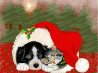 Puppy and Kitten Dreaming of Christmas wallpaper
